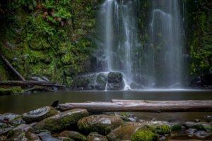 fallen tree in front of waterfall